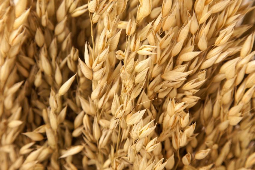 markets_grains-oilseeds_oats_849x565.jpg