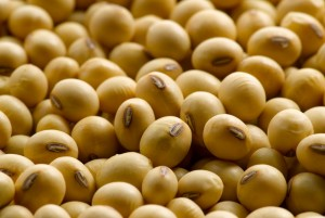 Soybean Oil Futures