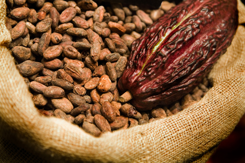 cocoa commodity The production of tropical agricultural commodities, such as cocoa ( theobroma  cacao) and coffee ( coffeaspp), the countries and.